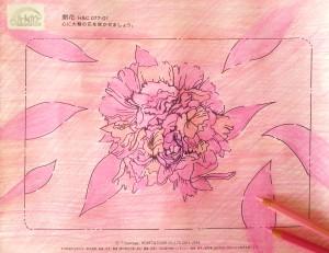 ピンク開花-1