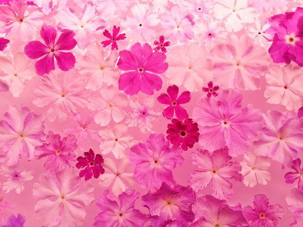 惹かれる色の心理 「ピンク」は、ときめき?依存?【色彩でココロをチェック】