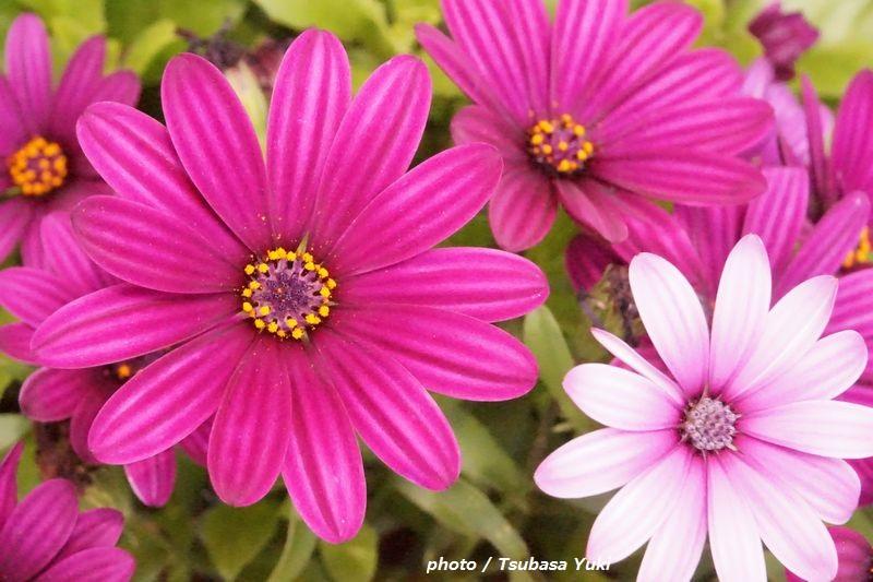 惹かれる色の心理 「マゼンタ(赤紫色)」は、愛情?プライド?【色彩でココロをチェック】