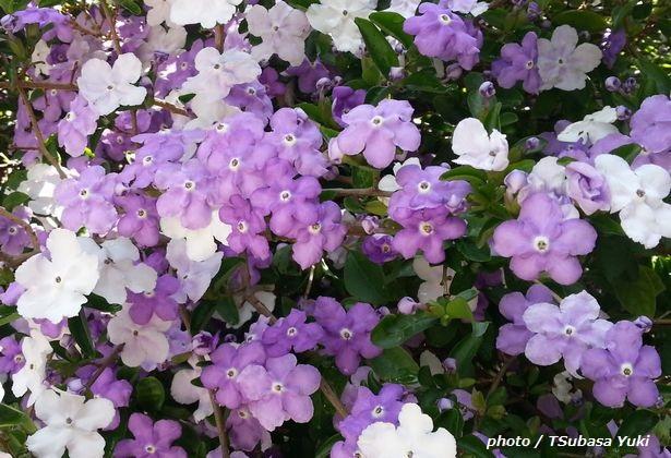 惹かれる色の心理 「紫」は、再生?葛藤?【色彩でココロをチェック】