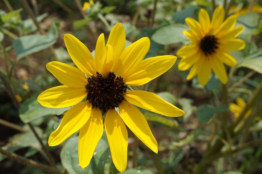 惹かれる色の心理 「黄色」は、好奇心?甘えたい?【色彩でココロをチェック】